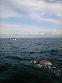 津軽海峡単独横断泳報告会